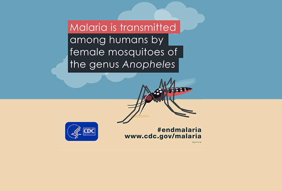 Infographic - Malaria is transmitted among humans by female mosquitoes of the genus Anopheles