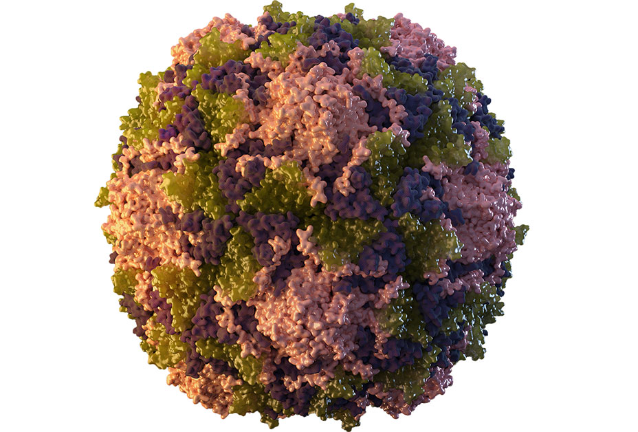 3D of single poliovirus particle
