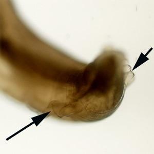 parasitic image