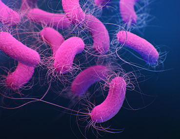 Medical illustration of multidrug-resistant Pseudomonas aeruginosa from CDC's 2019 AR Threats Report. P. aeruginosa infections can be particularly dangerous for patients with chronic lung diseases.