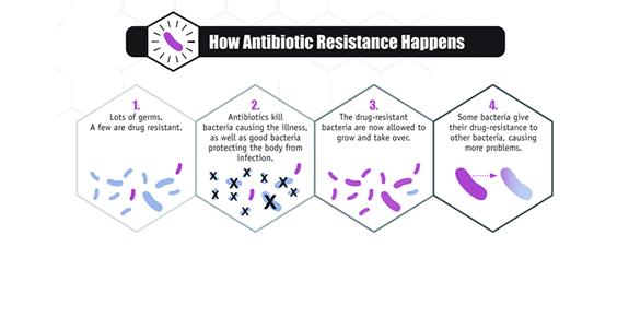How Antibiotic Resistence Happens