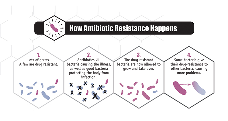 How Antimicrobial Resistance happens image