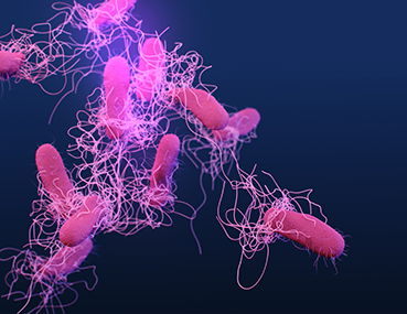 Medical illustration of drug-resistant Salmonella serotype typhi