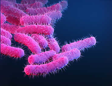 Medical illustration of shigella