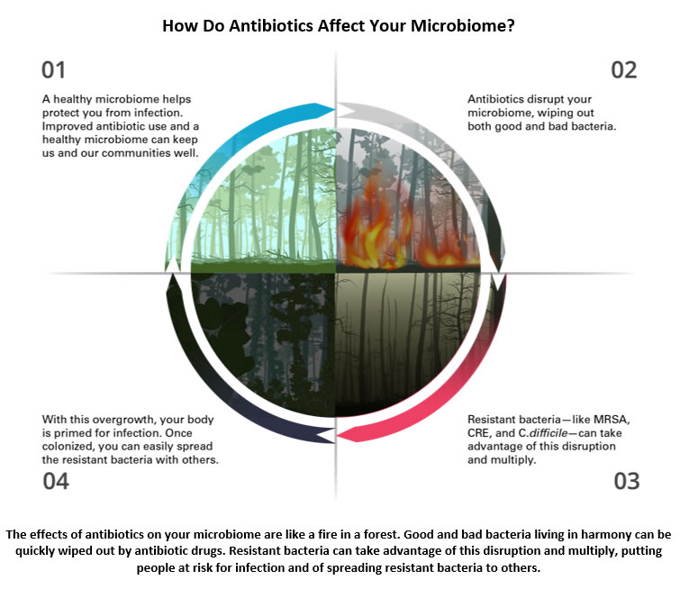 The effects of antibiotics on your microbiome are like a fire in a forest. Good and bad bacteria living in harmony can be quickly wiped out by antibiotic drugs. Resistant bacteria can take advantage of this disruption and multiply, putting people at risk for infection and of spreading resistant bacteria to others.