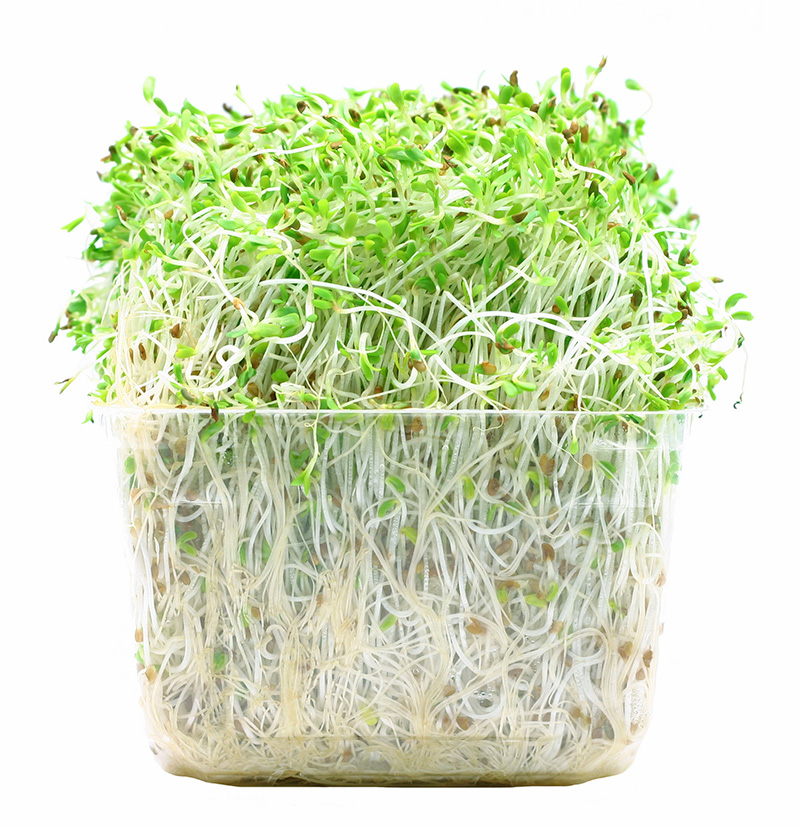 Image of alfalfa sprouts
