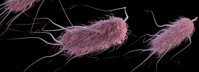Image result for e. coli