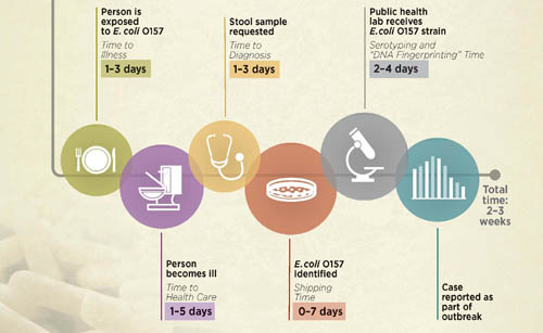 timeline for reporting E.coli O157 of cases