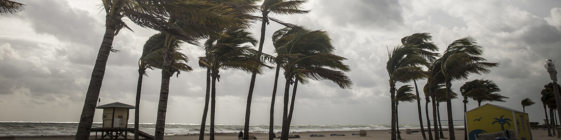 Palmeras antes de una tormenta tropical o huracán