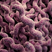 Illustration of campylobacter for image carousel