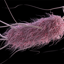 Illustration of e.coli for image carousel