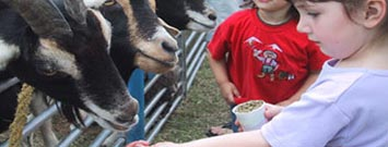 Photo: Children feeding goats