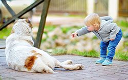 Small child pointing at large dog