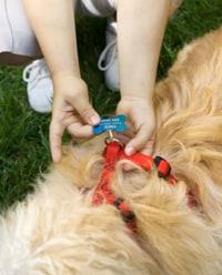 Photo: Dog tag