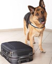 Photo: Dog with suitcase
