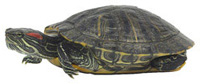 Reptiles, Amphibians, and Salmonella | Features | CDC