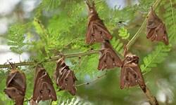 La influenza en los murciélagos