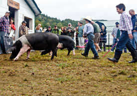 Photo: kids handling pigs at a fair exhibit