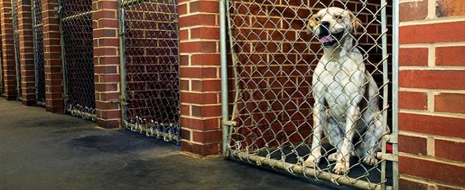 Un perro se sienta en una caseta cerrada en una guardería.