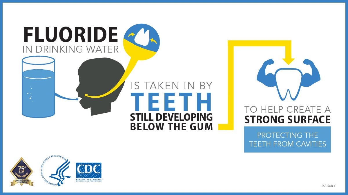 Fluoride in drinking water is taken in by teeth