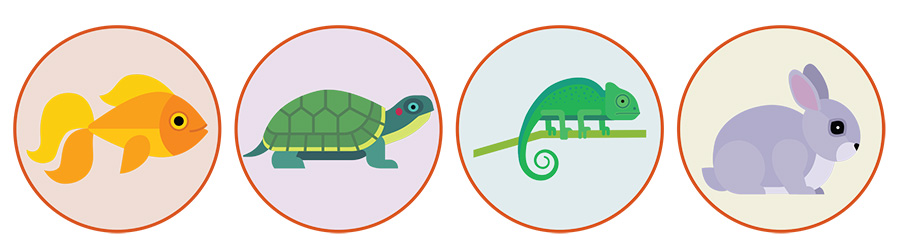 Illustration of a fish, turtle, lizard, and a rabit each surrounded by a circle