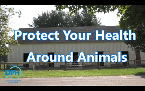 Image representing the Protect Your Health Around Animals