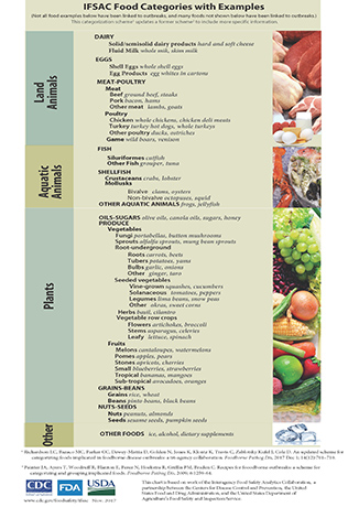 Food Categorizations with Examples