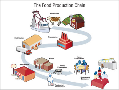A visual representation of the food production chain.