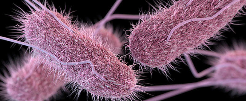 Photo of Salmonella pathogen
