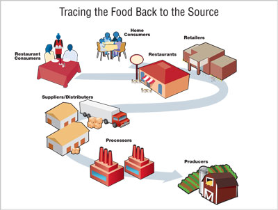 A visual representation of tracing the food back to the source when finding the point of contamination.