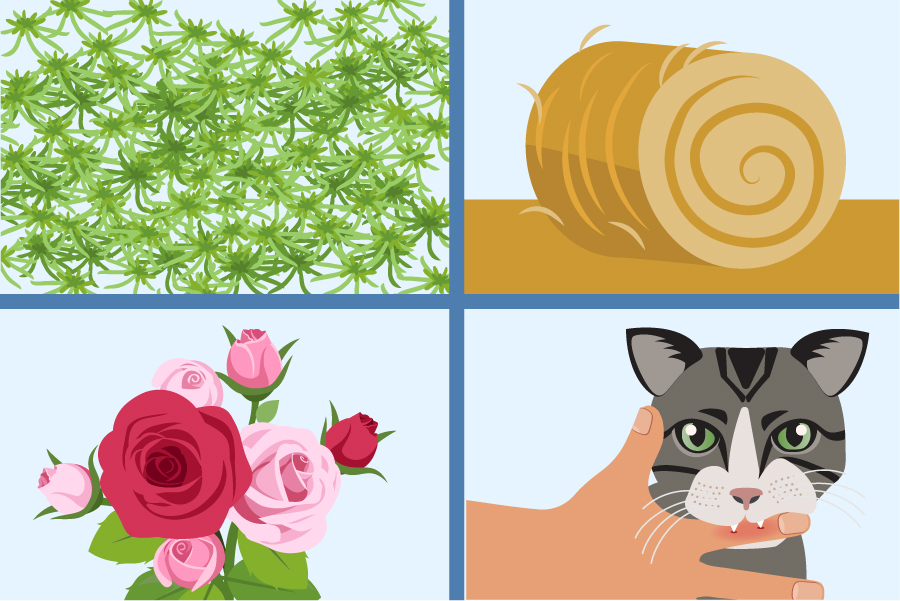 Illustration of moss, hay, roses, and a kitten biting a persons hand that are often linked to sporotrichosis