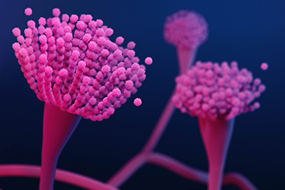 Illustration of Aspergillus