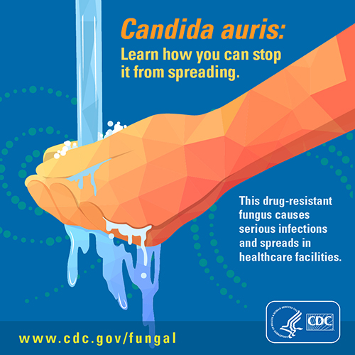 Image showing button for download on Candida auris: Learn how you can stop it from spreading.