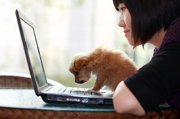 lady and puppy looking at laptop
