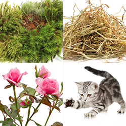 Picture of moss, hay, roses, kitten