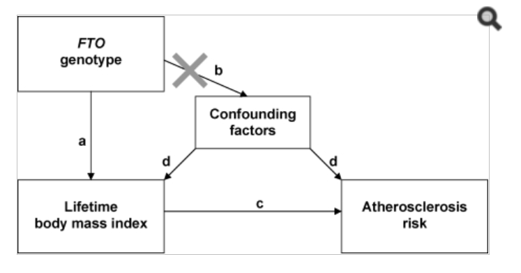 Text box1: FTO genotype; with arrow a pointing to text box2: Lifetime body mass index; with arrow c pointing to Text box3: Atherosclerosis risk; first text box with crossed out arrow b pointing to text box4: Confounding factors, which as two arrows d pointing to textbox 2 and 3