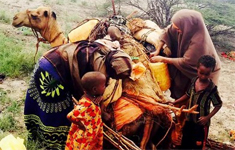 Somali pastoralists on their way to Dadaab refugee camp in search of food and care. (Credit: CDC-Kenya, Ahmed Unhur, KEMRI)