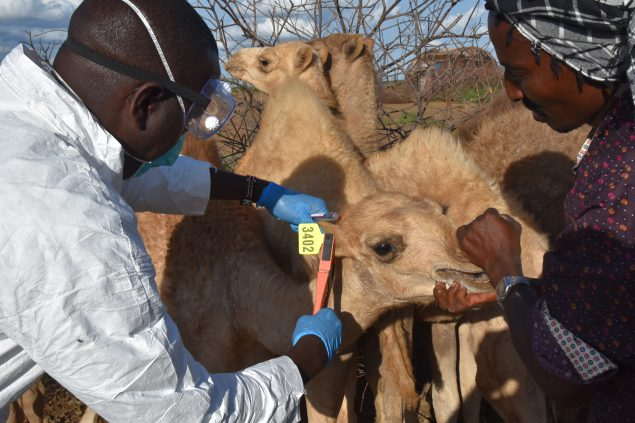 nnovative Tracking of Zoonotic Diseases