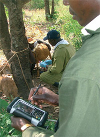 A man uses a mobile communication device to collect and store data on animal diseases. The CDC Global Disease Detection program partnered with the Kenya Medical Research Institute (KEMRI) and the University of Glasgow to launch the Animal Disease Surveillance and Response pilot project in Asembo, Rarieda District.