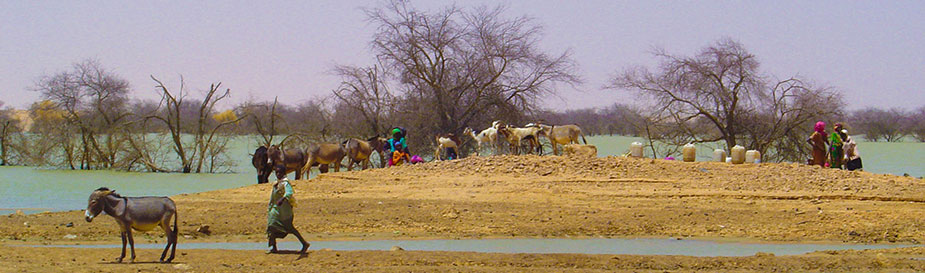 Antelopes in Chad