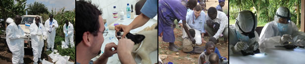 Photo collage of GDD Op Center work, including people suiting up in personal protective gear to look for Ebola, and scientists testing both animals and people for disease.