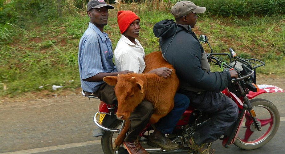 Both human and animal travelers on a motorcycle in Kenya helps highlight the need for a