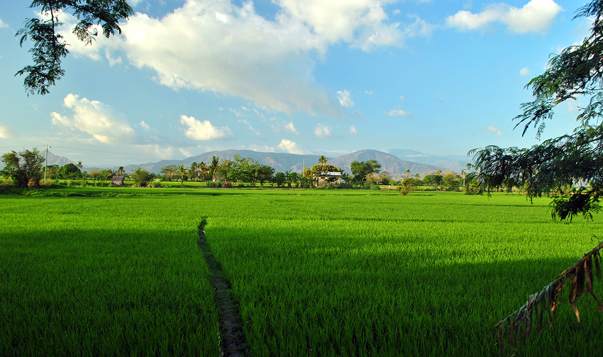 large rice paddies made accessing houses challenging