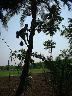 CDC and partners go to great lengths to collect samples for testing. In this photo, sap is collected from a palm tree in Bangladesh to test for Nipah virus, which causes inflammation of the brain and commonly leads to death.