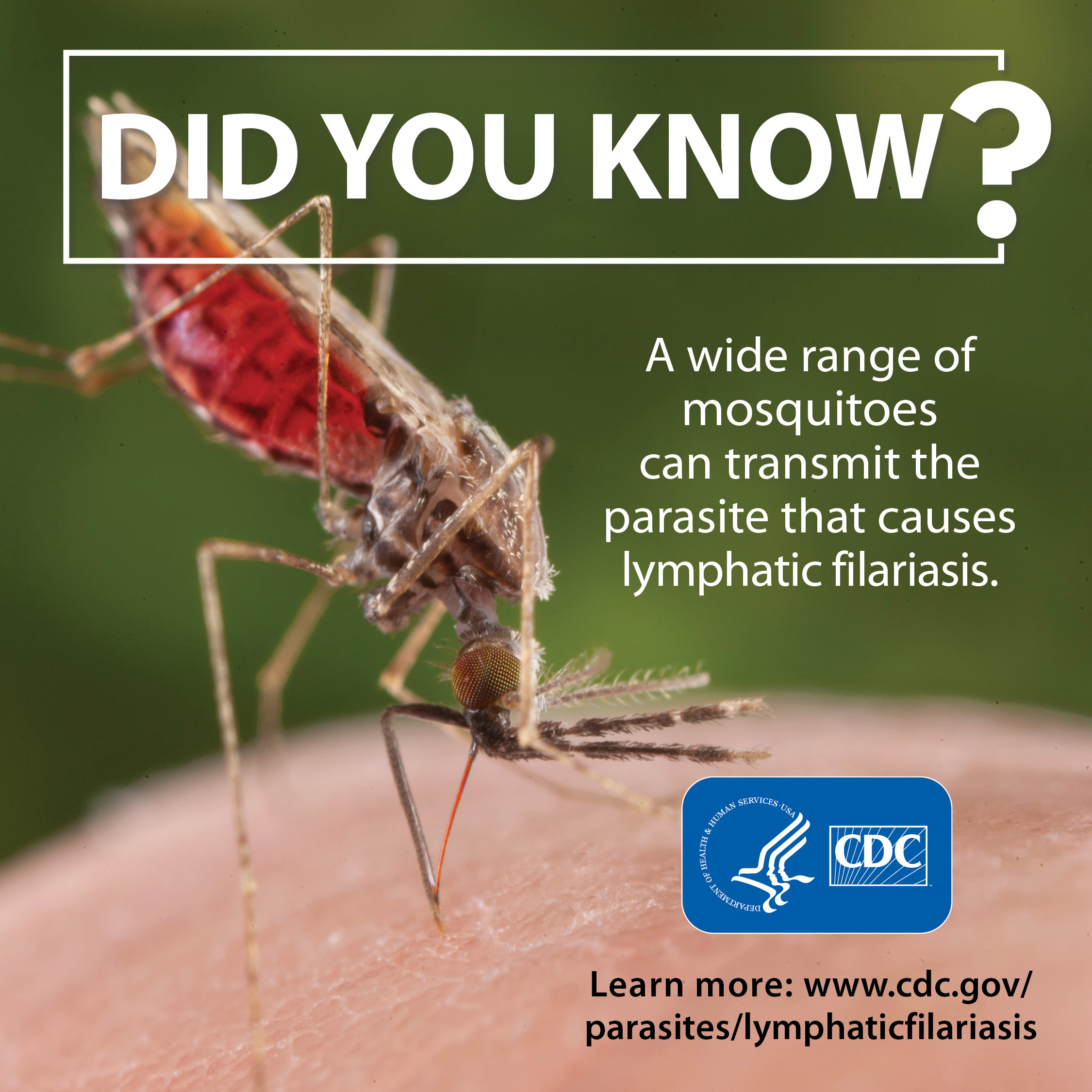 Did you know a wide range of mosquitoes can transmit the parasite that causes lymphatic filarisis.