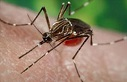 A new mosquito-borne disease hits the Western Hemisphere, including the United States