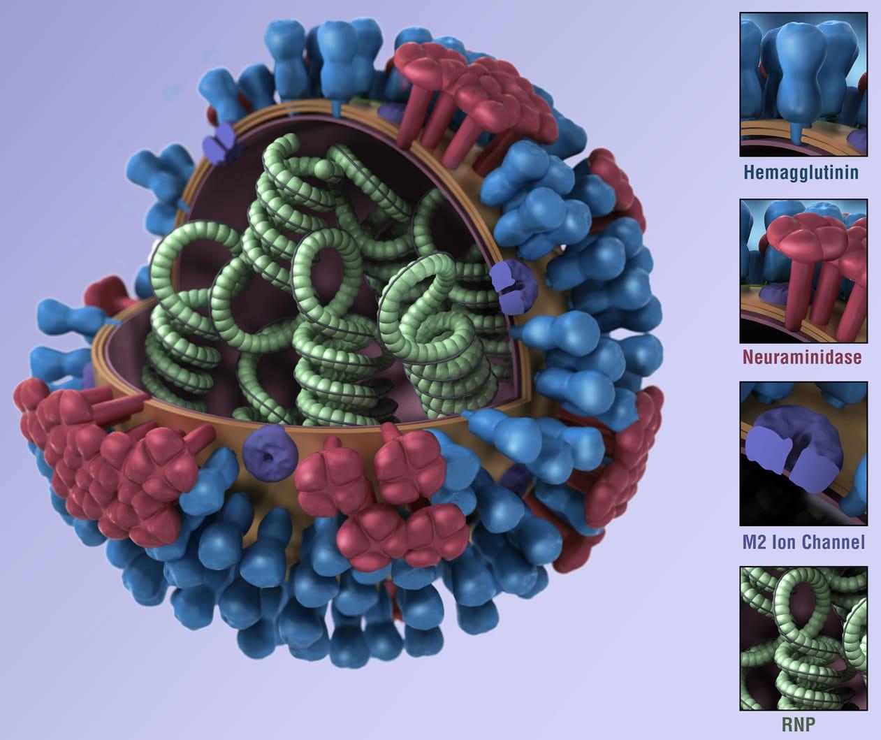 Large  H1n1 Virus Cell