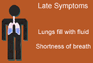 Late symptoms: lungs fill with fluid, shortness of breath