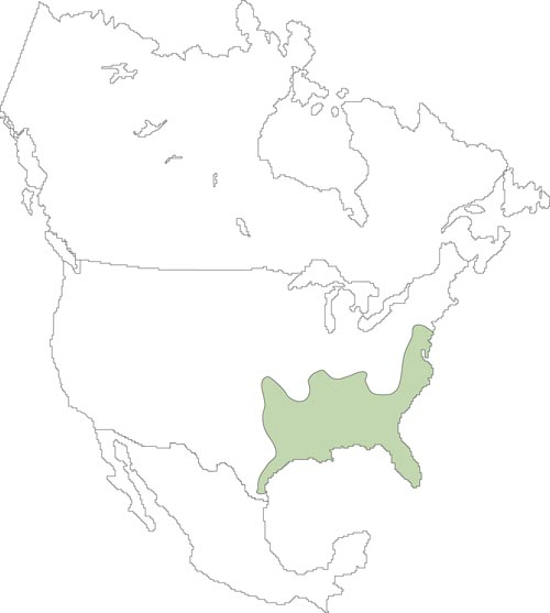 Map of rice rat distribution in north america