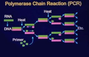 Polymerase Chain Reatcion (PCR)